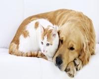 Como fazer seu cão ou gato viver mais tempo e melhor?