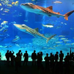 Conheça os 5 aquários mais impressionantes do mundo