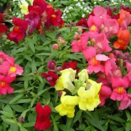 Dicas de plantas para forrações no jardim