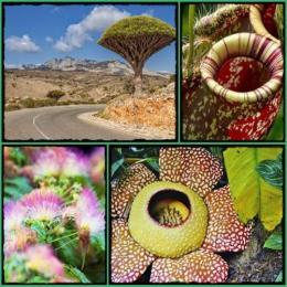 As 10 plantas mais incríveis do mundo