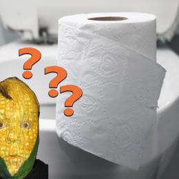 Como as pessoas se viravam antes do papel higiênico?