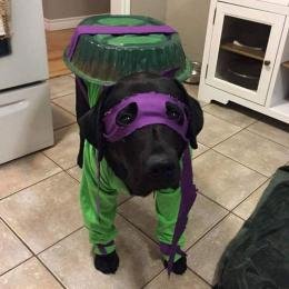 E se fossem Cachorros Ninjas?