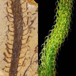 Plantas extintas de volta a vida?