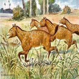 Os antepassados dos cavalos e rinocerontes