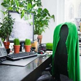 As plantas em seu ambiente de trabalho