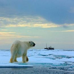 Ursos-polares: em busca do gelo