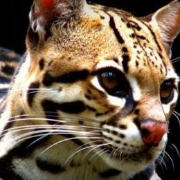 Como seria o mundo sem os animais carnívoros?