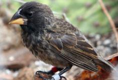 Cientistas identificam pássaros em processo de evolução para gerar nova espécie