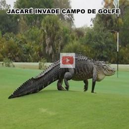 Jacaré gigante invade campo de golfe na Flórida
