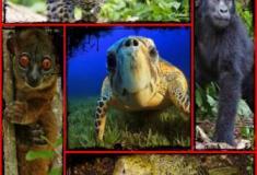 Veja 15 espécies que podem entrar em extinção a qualquer momento