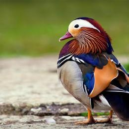 Conheça 10 dos animais com as cores mais belas e únicas do mundo