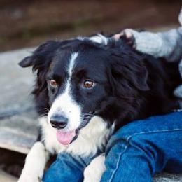 8 provas de que ter um cachorro faz bem à saúde