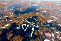 Cinco gráficos que explicam como a poluição por plástico ameaça a vida na Terra