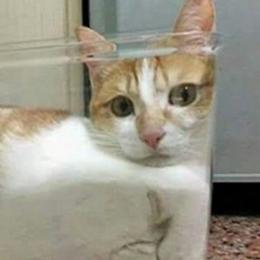 Os gatos não tem uma forma definida