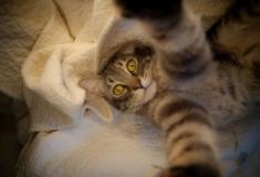 Top10 coisas diabólicas que seus gatos fazem
