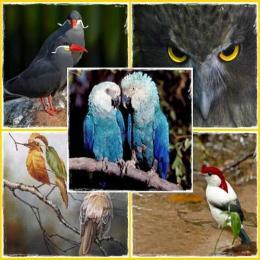 Top 10 aves encantadoras