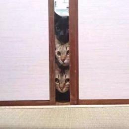 Gatos e sua reação em situações novas