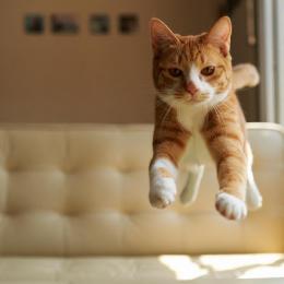 Por que os gatos sempre caem em pé?