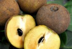 7 frutos exóticos que você não sabia que existiam