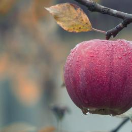 7 alimentos que vão te deixar mais inteligente