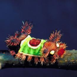 Conheça 7 lagartas tóxicas que você com certeza não deve tocar