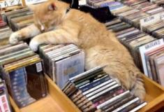 Gatos dormem em qualquer local