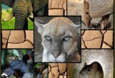 Será que os animais podem nos ajudar a prever terremotos?