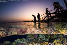 As mais belas fotos subaquáticas do concurso Underwater Photographer of the Year