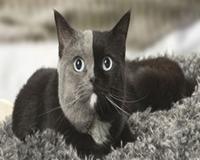 Filhote com condição rara se torna uma bela gata