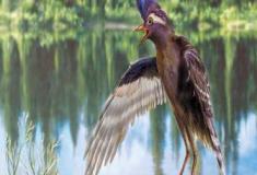 O mais antigo ancestral conhecido de pássaros modernos