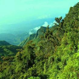 Seres humanos já ocupavam florestas tropicais a 20.000 anos atrás