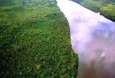 A floresta Amazônica, sem ela estamos perdidos