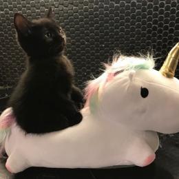 Inspiration: Gatos pretos