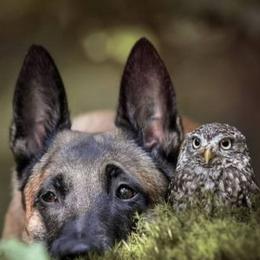 A incrível amizade de um cachorro e uma coruja