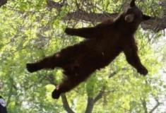 Apenas um urso se divertindo