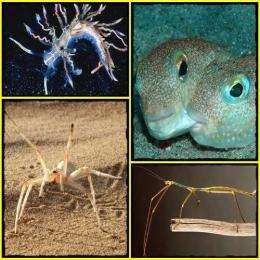Top 10 de espécies recém-descobertas
