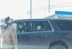 Foto de cão 'atrás das grades' em viatura policial no Canadá viraliza