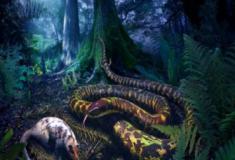 Novas pistas da origem e evolução das serpentes