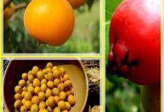 Frutas que pouco conhecemos da Mata Atlântica