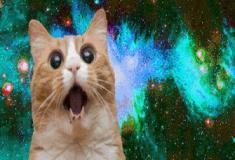 Pegadinha do gato louco
