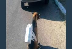 Este cachorro na fila de um posto prova que o brasileiro precisa ser estudado
