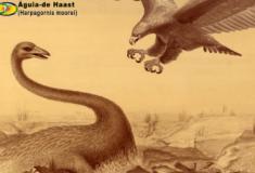 Conheça a Águia-de-Haast, a maior águia que existiu