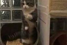O gato civilizado