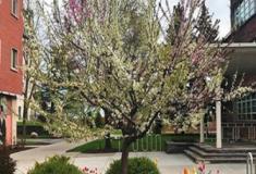 Esta árvore mágica produz 40 tipos diferentes de frutas