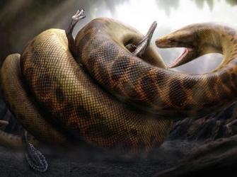 Conheça a Titanoboa, a maior cobra que já existiu