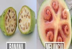 10 frutas e vegetais que eram muito diferentes antes de começarmos a cultivá-los