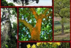 Quais são as plantas ameaçadas de extinção no Brasil?