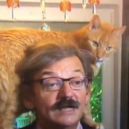 Gato 'rouba a cena' durante entrevista ao vivo em TV holandesa