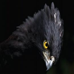 A visão das águias