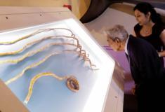 Indiano corta maiores unhas do mundo e expõe em museu de NY